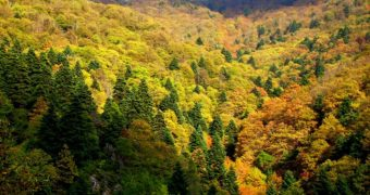 Δάσος Natura Εύβοια