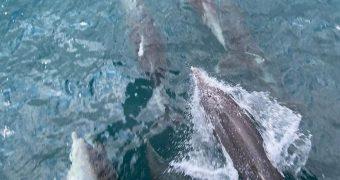 δελφίνια Εύβοιας